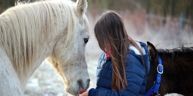 Pferd erkennt menschliche Emotionen